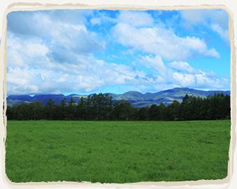 上士幌 畑の風景